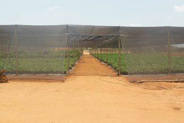 AGRICULTURE ET DEVELOPPEMENT FORESTIER